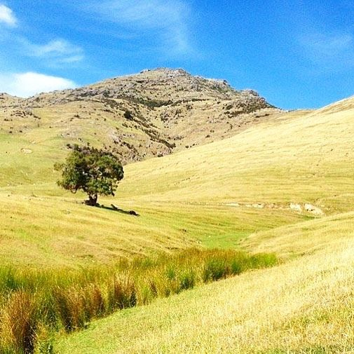 One of the best things about New Zealand is that you can go to places where there is nobody else. You have all the nature and all the sun just for yourself. Like here on Banks Peninsula near Akaroa...