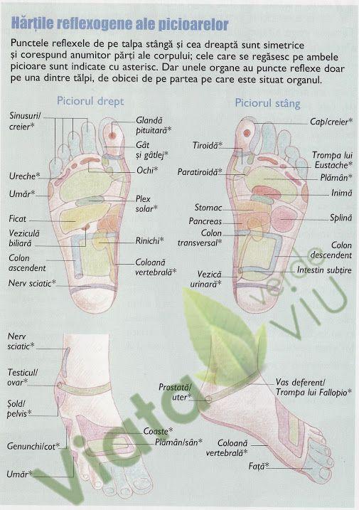 Hartile reflexogene ale picioarelor