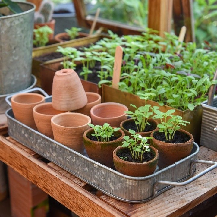 Our Terracotta Grow Pots And Galvanised Metal Storage Tray Are Ideal For Gardening Without Plastic Traditionally Use Terracotta Strawberry Pots Pot Terracotta
