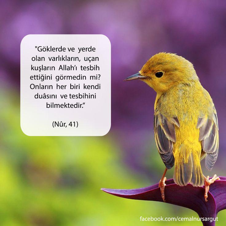 """""""Göklerde ve  yerde  olan  varlıkların,  uçan  kuşların  Allah'ı  tesbih  ettiğini  görmedin  mi?  Onların  her  biri  kendi  duâsını  ve tesbihini  bilmektedir."""" (Nûr, 41)"""
