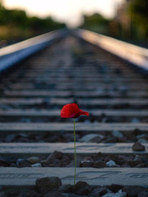 Una flor roja en las vias