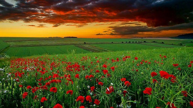 Red Flower Wallpaper | Best HD Wallpapers