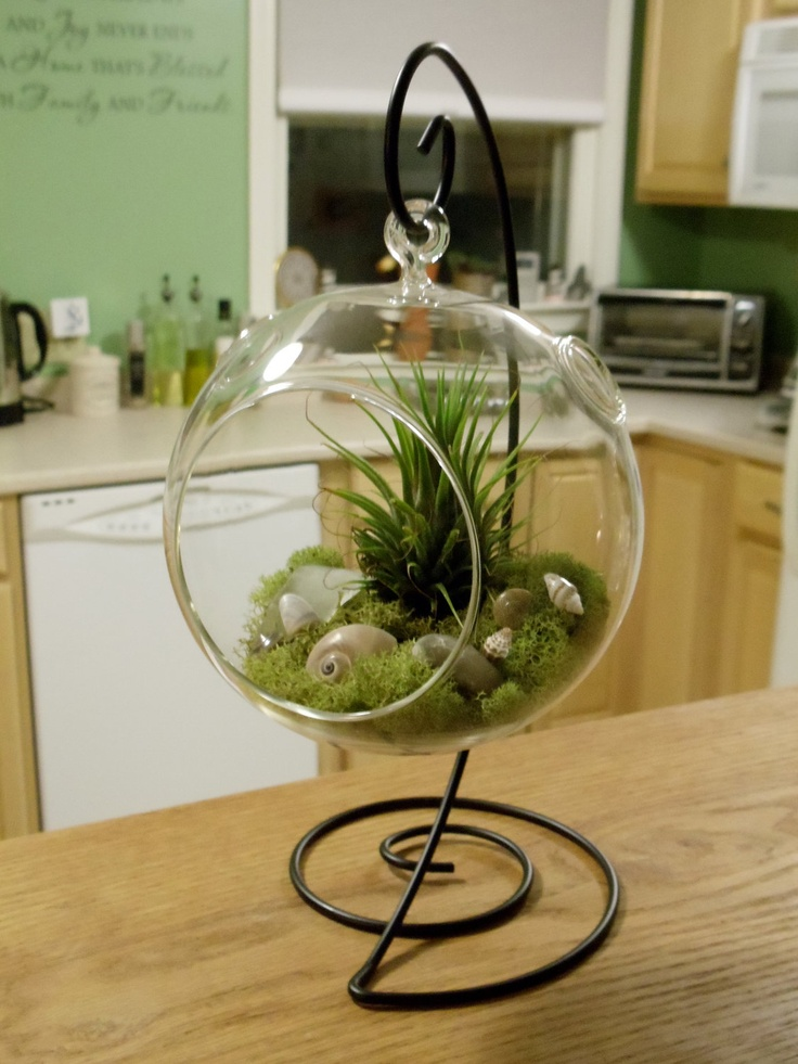 Air Plants | Air Plant Terrarium with Decorative Stand by SecondBreathDesigns