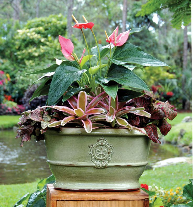65 Best South Florida Container Gardens Images On