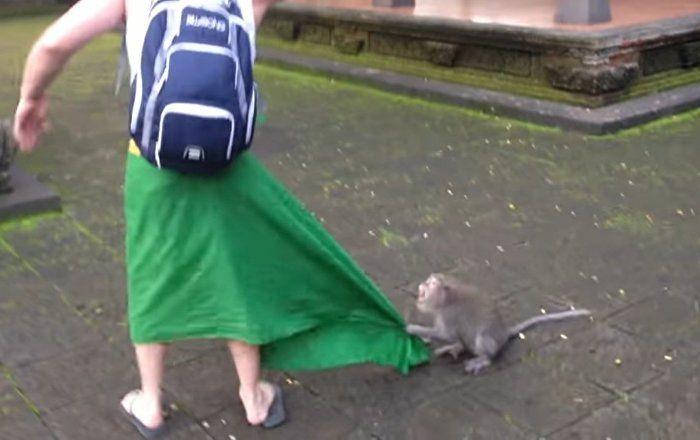 Monkey Attacks Man While Protecting Her Infant - Sputnik International