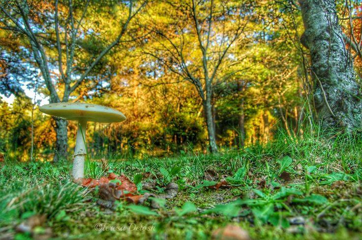 #Mushroom in Yard #Photograph