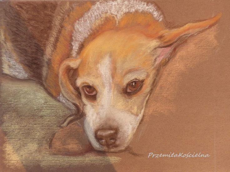 Canis Art Studio: Beagle i przyjaciele.