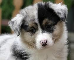 That face would totally fit in with the cuteness factor of my home!