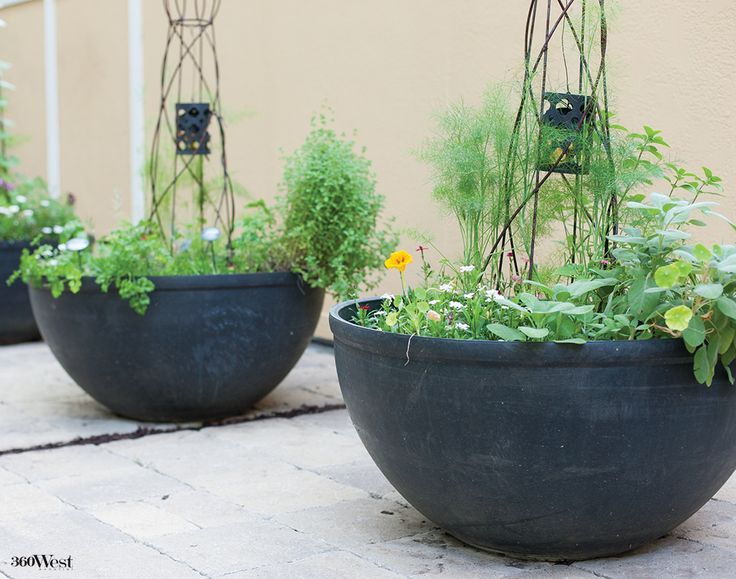 Oversize Rubber Pots Now House Pollinator Friendly Herbs And Flowers Wired With Small Lights 360 West Magazine July 2015