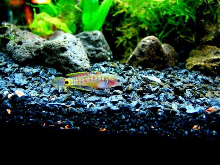 45 best ideas about aquariums on pinterest fish