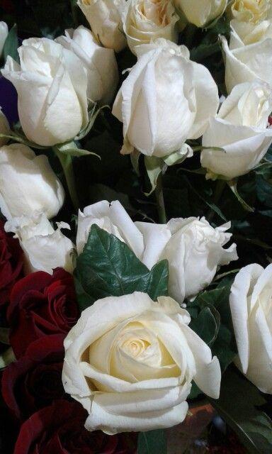 Розы Белый шоколад