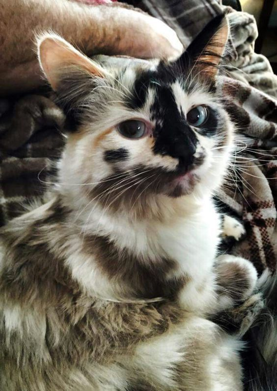 Beautifully Unique Cat