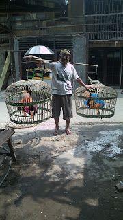 foto ayam bangkok juara jakarta