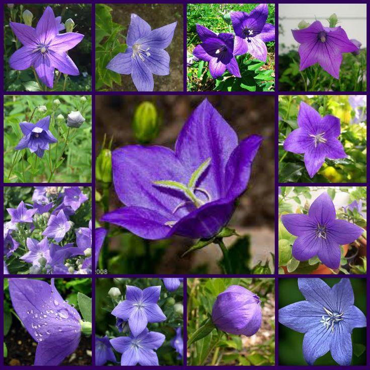 Purple Flowers Names | Purple Flowers | Types of Purple Flowers | Names of Purple Flowers ...