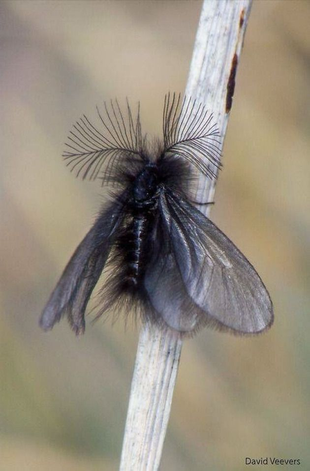 Found This On Fb With This Caption Can You Believe This Is A Moth She Must Be Dressed For Dinner Lol I Think She S Beautiful Insects Moth Cool Insects