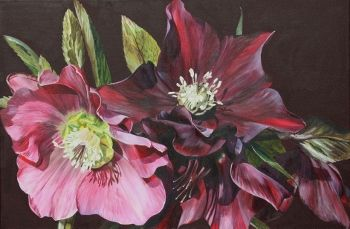 Gothic Hellebores 60cmx90cm www.sarahcaswell.co.uk