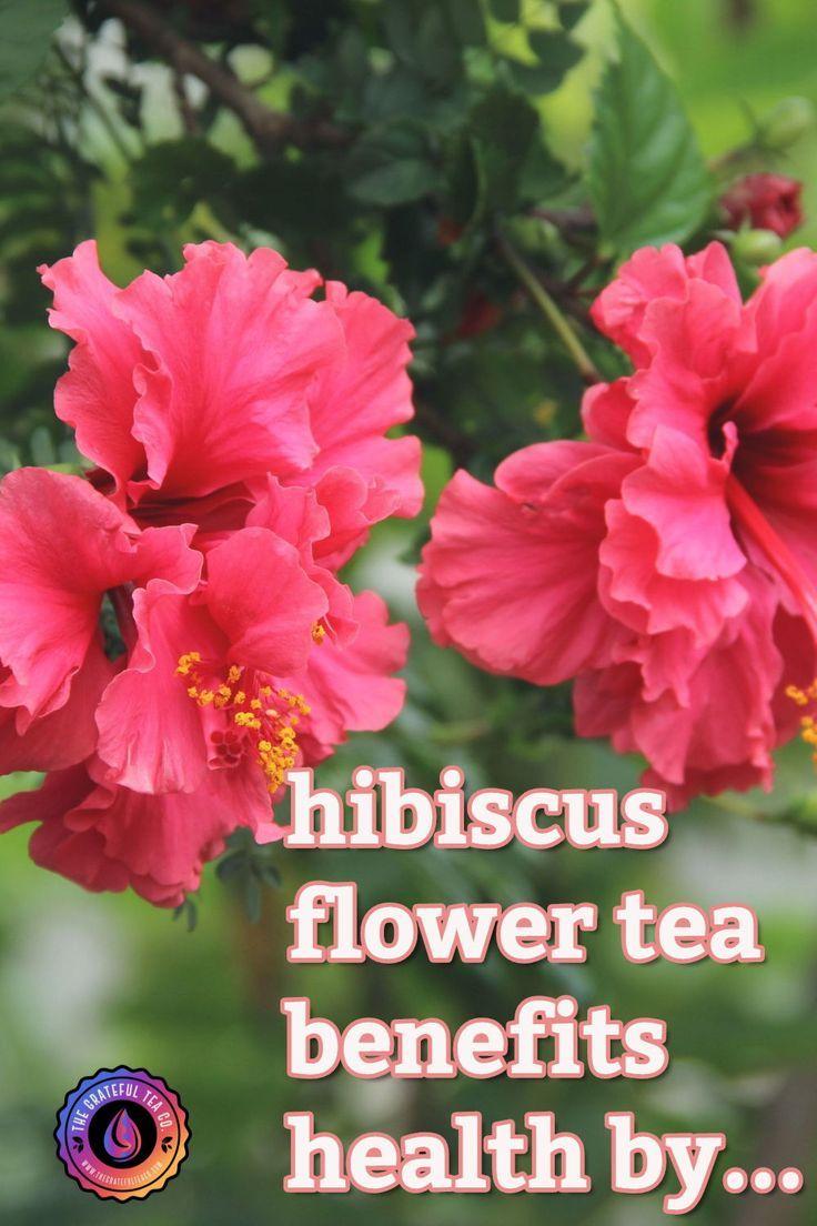Hibiscus Flower Herbal Tea Blend Sachets In 2020 Hibiscus Flower