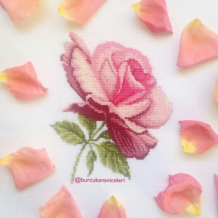 Rose Crossstitch