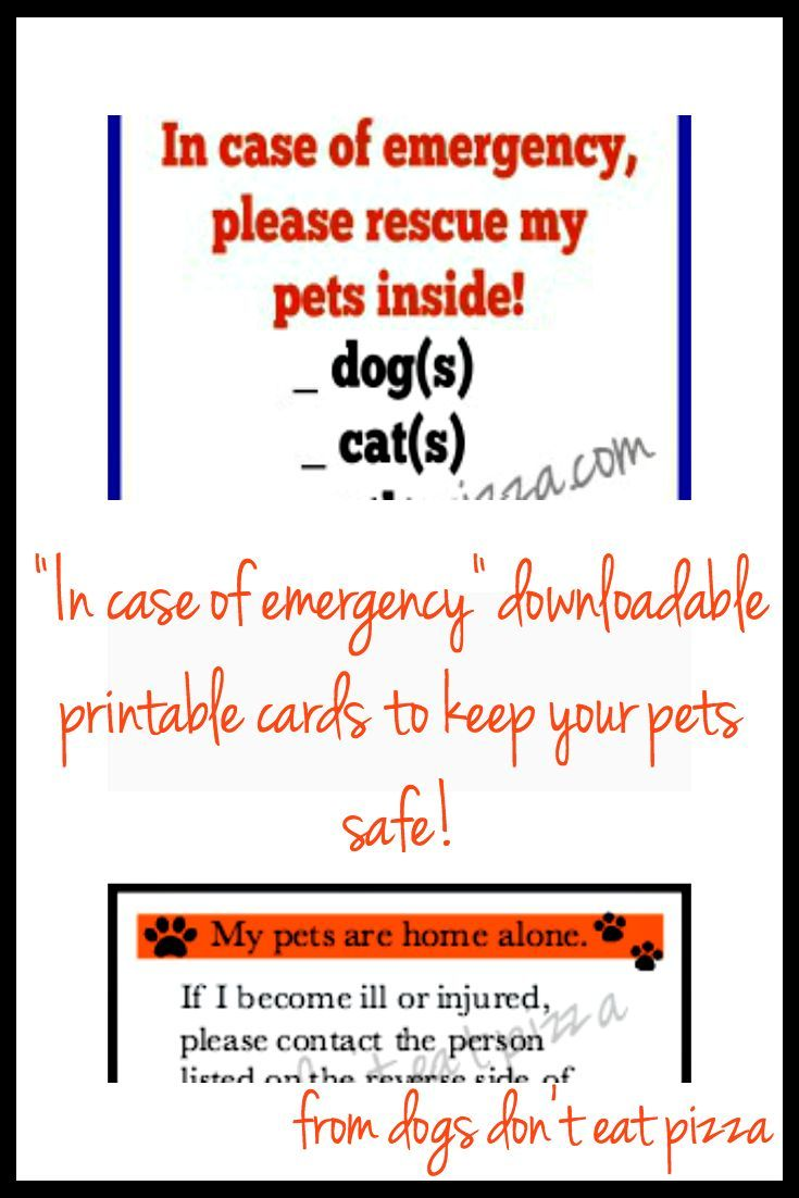 94 best pet stuff images on pinterest dog craft projects and