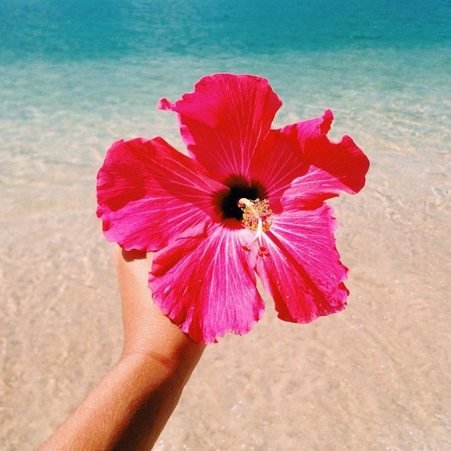 Flowers By The Ocean Are Such Great Inspiration