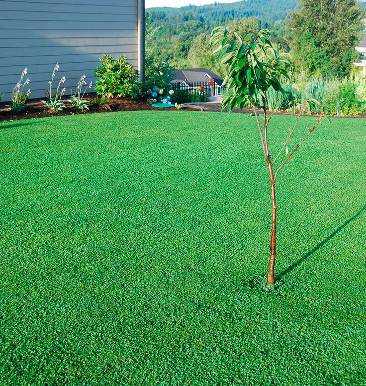 Replace your lawn or just give it a helping hand by planting micro clover seeds to feed nitrogen to greases and to naturally prevent the spread of weeds.