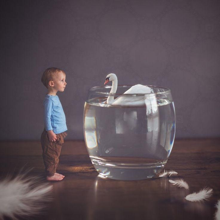 What is that swan doing in a glass? Photoshop composite photography. Natural light studio. Feathers.