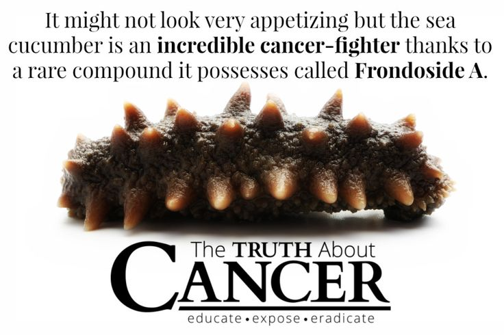 What are the sea cucumber's anti-cancer properties and how can it be used as an adjunct for chemotherapy? Click on the image to get the scoop.. We rely on health heroes like yourself to help us spread the word on this important, life saving information. Please also share what you learned with friends and family.