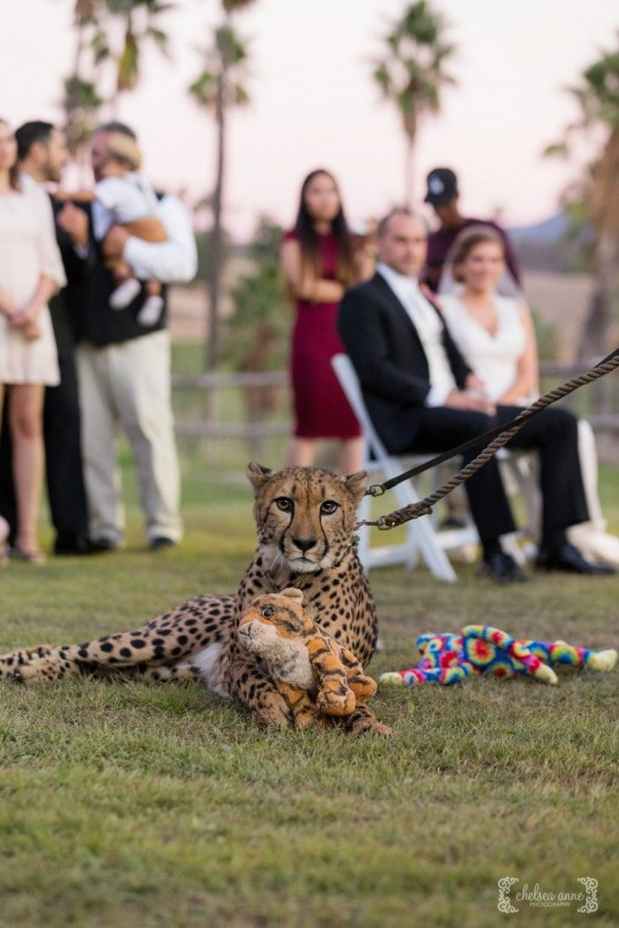 Safari park wedding guest! Congrats to Kristin + Andrew | Photo credit: Chelsea Anne Photography