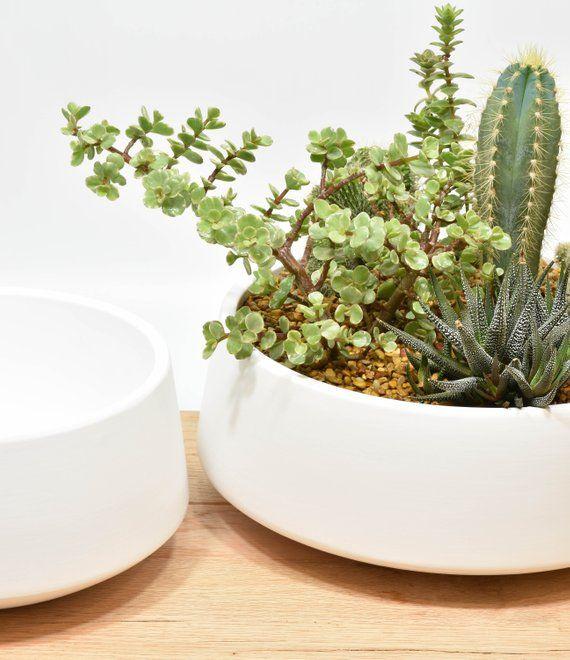 Sensational Succulent Planter Succulent Bowl Tabletop Succulent Interior Design Ideas Apansoteloinfo