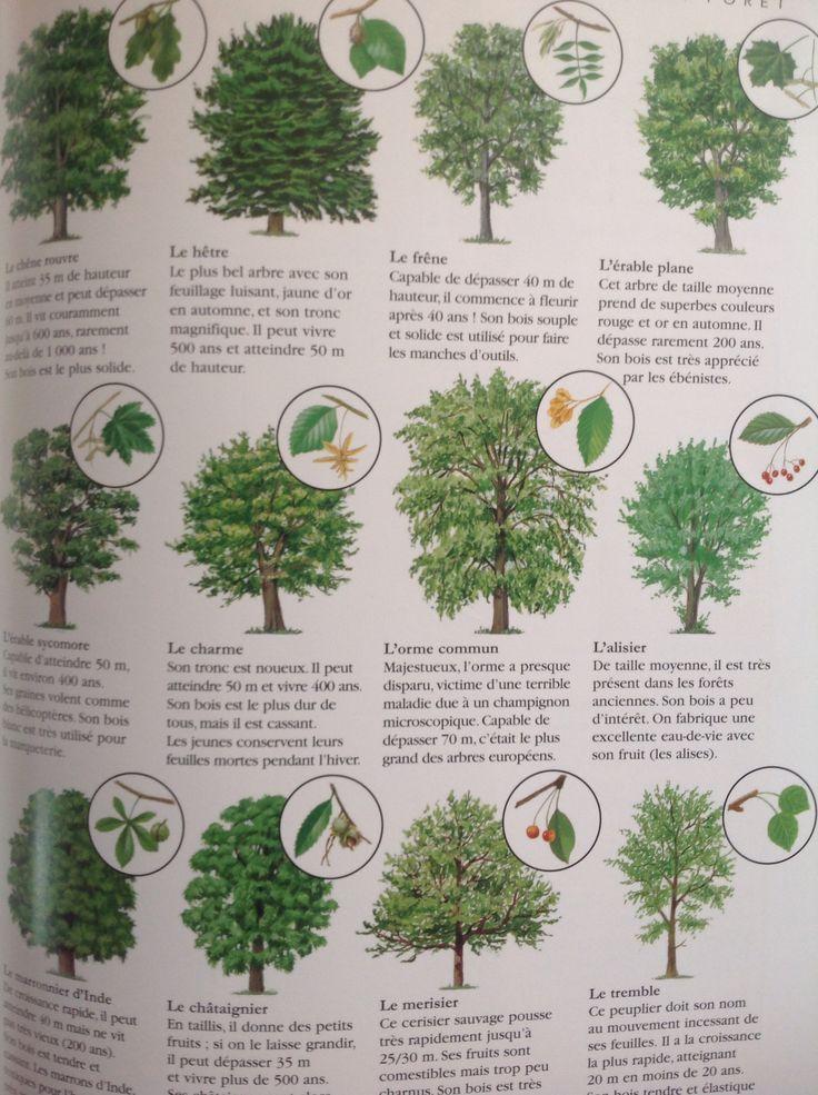 best 25 reconnaitre les arbres ideas on pinterest les arbres la science des plantes and. Black Bedroom Furniture Sets. Home Design Ideas
