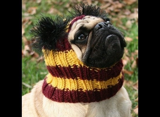 : Pugs Hats, Adorable Dogs, Fans, Pet, Gryffindor Hats, Poor Dogs, Harry Potter, Gryffindor Pugs, Animal