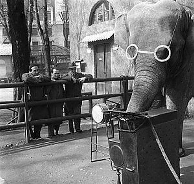Durante la seconda metà dell'800 nei Giardini Pubblici di Porta Venezia iniziarono a comparire gabbie con animali esotici e voliere per uccelli tropicali. Le nuove attrazioni ebbero un clamoroso successo tanto che nel 1923 venne inaugurato nell'angolo nord occidentale degli stessi Giardini il nuovo zoo di Milano. Per decenni rimase una delle massime attrazioni per i bambini milanesi.  La maggiore attrazione di tutto lo zoo era l'elefantessa Bombay che indossando degli enormi occhiali bianchi…