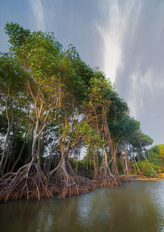 Mangrove Morning, La Manzanilla, Costa Alegre, Jalisco, Mexico