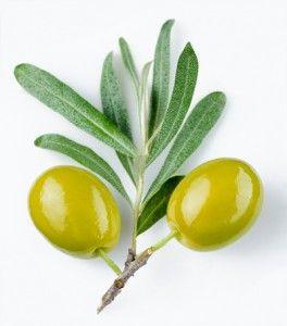 Olive Fruit Oil Pure Organics Eye Cream