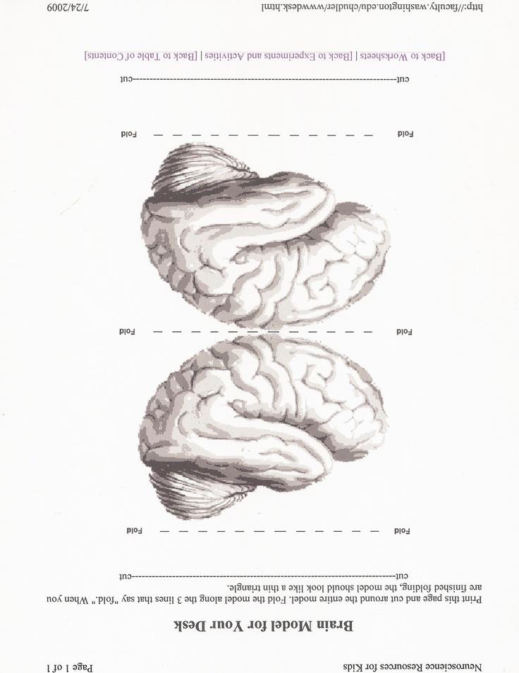LOL! foldable brain Hjärna