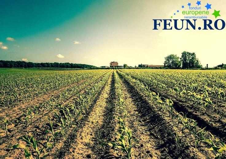 S-a deschis prima sesiune de depunere de cereri de finanțare pentru proiecte prin PNDR 2014-2020. Acum este timpul să acționați dacă vă doriți dezvoltarea