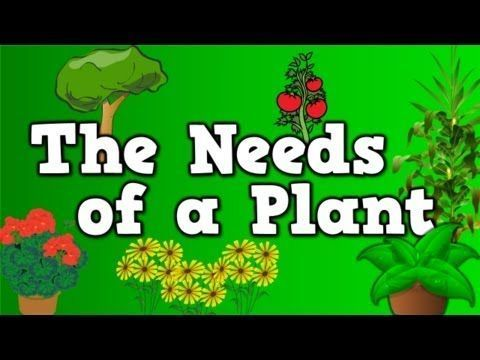 The Needs of a Plant (song for kids about 5 things plants need to live) - YouTube