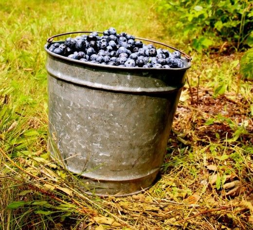 Blueberries for Sal Unit Study
