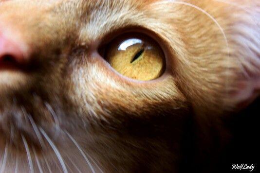 Occhi che osservano,scrutano..e ti entrano nell'anima. @wolflady90