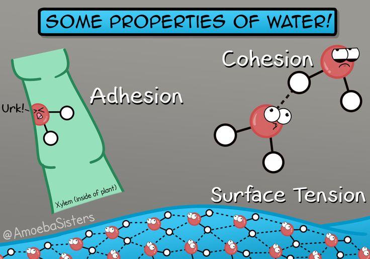 properties of water worksheet biology awesome bioknowledgy 2 2 water