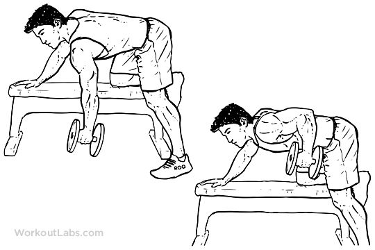 Single / One Arm Dumbbell Bench Rows