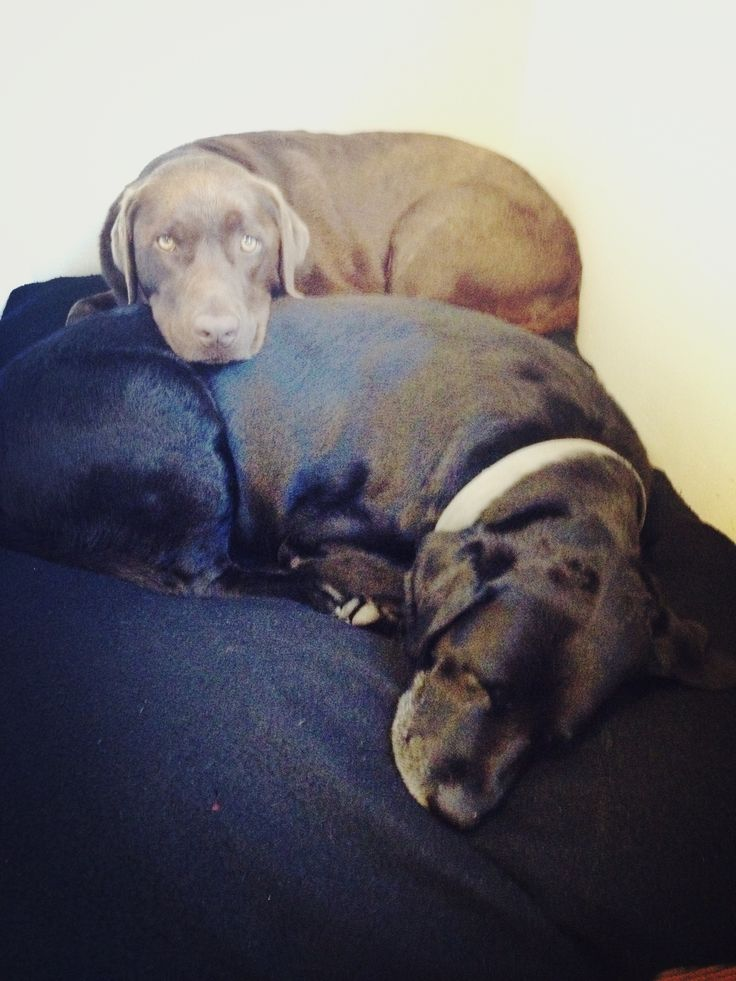 Family doggies!