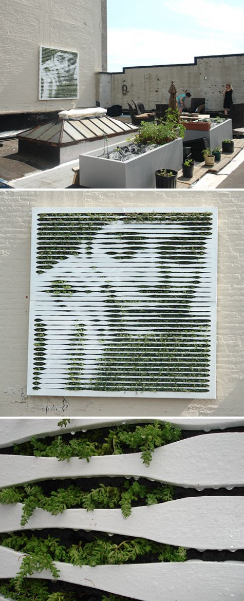 Succulent living wall installation in Brooklyn by Mosstika.