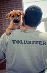 Volunteer - for a dog rescue organization. It will give you warm fuzzies.