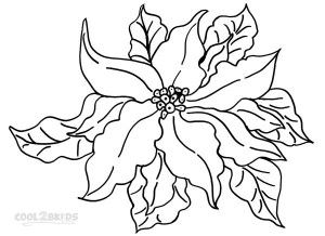 Poinsettia Coloring Pages Print
