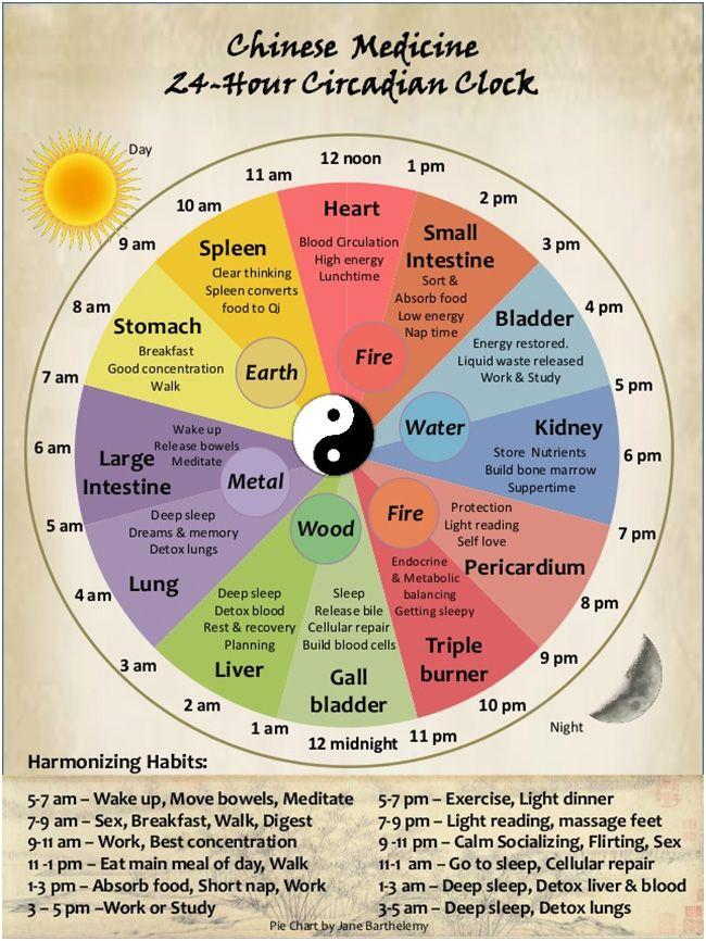 Circadian rhythms chart.  Chinese medicine