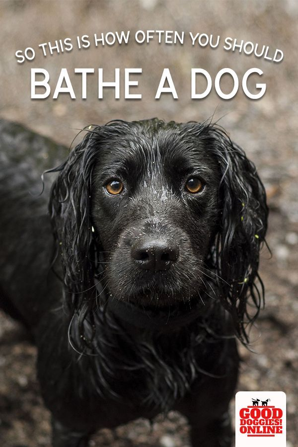 How Often Should You Be Bathing Your Dog Dog Grooming Tips Dog