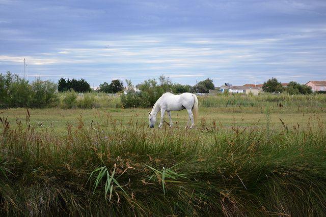 Camargue | Flickr – Condivisione di foto!