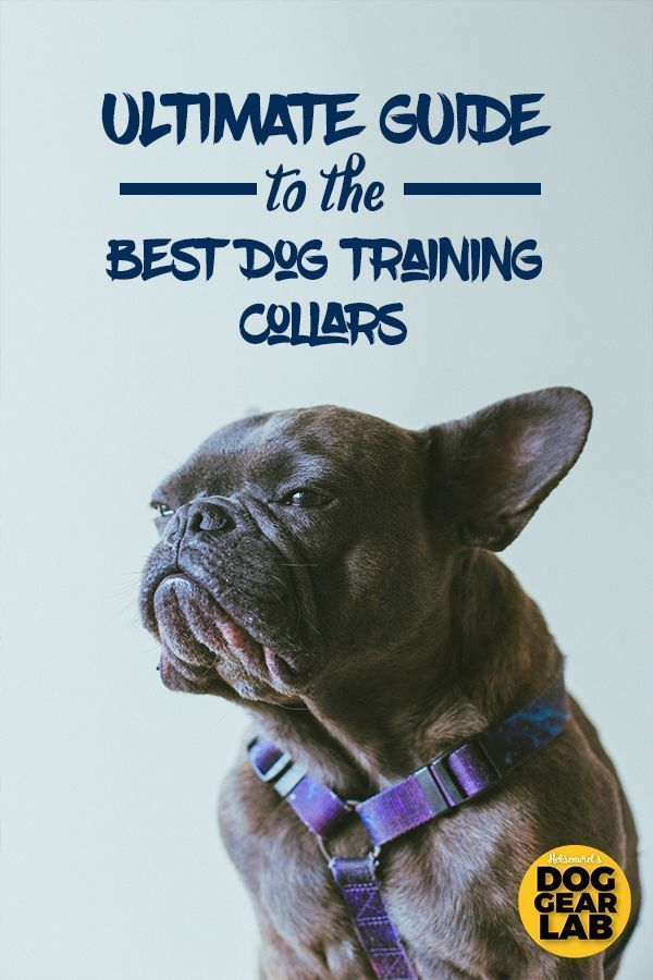 Best Dog Training Collar Reviews Top 9 Recommended Easiest
