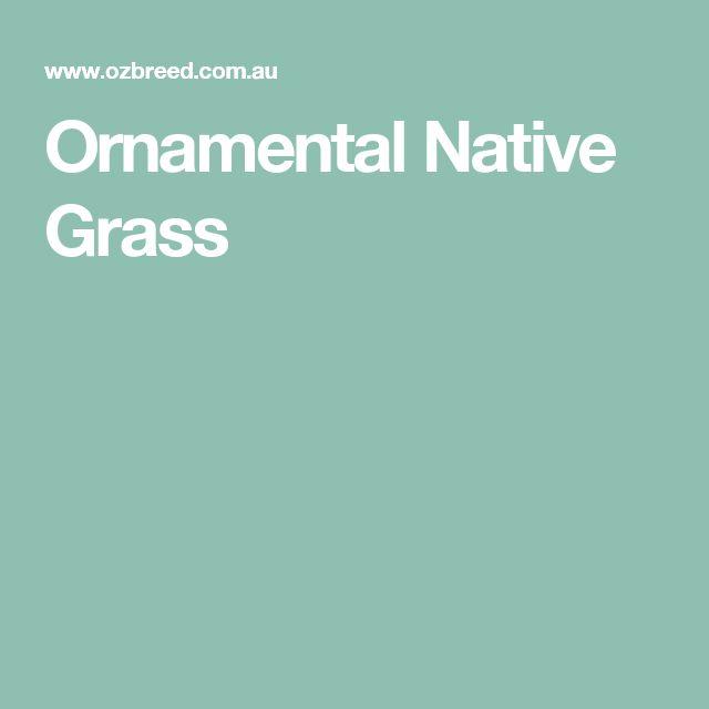 Ornamental Native Grass